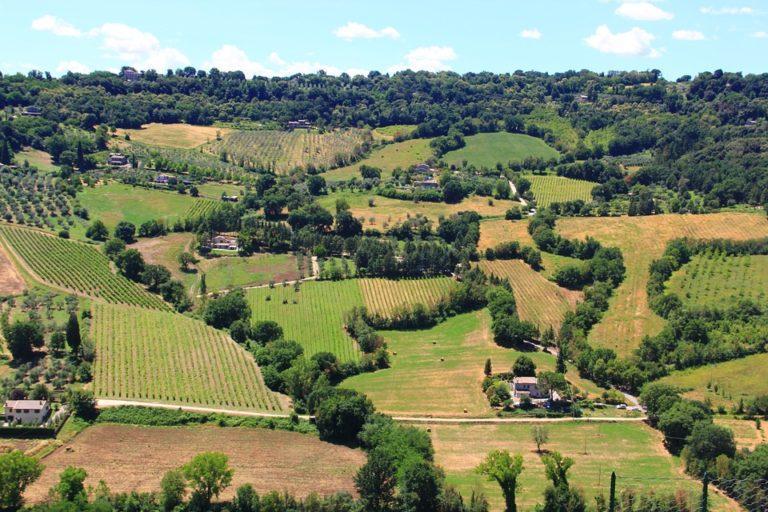 export vino umbria
